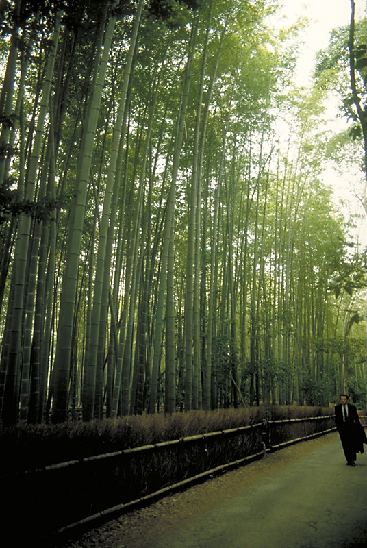 Path through a bamboo forest near Kyoto