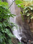 Waterfall in the tropical biome